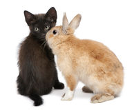 Black kitten playing with rabbit Stock Photos