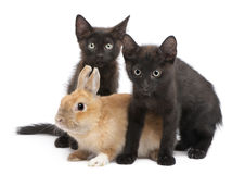Black kitten playing with rabbit Royalty Free Stock Images