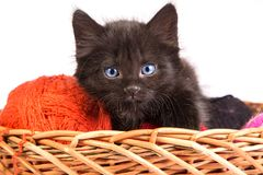 Black kitten playing with a red ball of yarn on white background. Black kitten playing with a red ball of yarn isolated on a white background Royalty Free Stock Image
