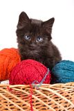 Black kitten playing with a red ball of yarn on white background. Black kitten playing with a red ball of yarn isolated on a white background Stock Photo