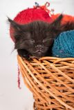 Black kitten playing with a red ball of yarn on white background. Black kitten playing with a red ball of yarn  on a white background Stock Photography