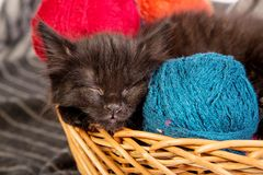 Black kitten playing with a red ball of yarn on white background Royalty Free Stock Images