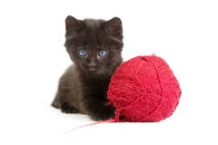 Black kitten playing with a red ball of yarn on white background Stock Images