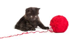 Black kitten playing with a red ball of yarn on white background Royalty Free Stock Image