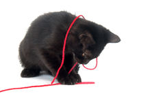 Black kitten playing with red yarn Royalty Free Stock Photo
