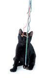 Black kitten playing with yarn Stock Photo