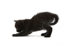The black kitten plays. The small black kitten plays Royalty Free Stock Photography