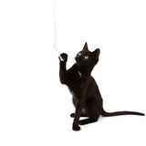 Black kitten plays with a rope. A black kitten plays with a rope and looks up Royalty Free Stock Photo