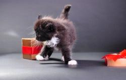 Black kitten from present box Stock Photos