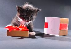 Black kitten from present holiday box Stock Images