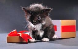 Black kitten from present holiday box Stock Photos