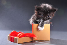 Black kitten from present holiday box Royalty Free Stock Images