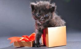Black kitten from present holiday box Stock Photo