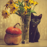 A black kitten and a pumpkin. A black kitten peeks out from a vase with flowers. Pumpkin near a vase Royalty Free Stock Photography