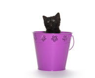 Black kitten in purple pail. Cute black baby kitten inside of purple bucket isolated on white background stock photo