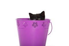 Black kitten in purple pail. Cute black baby kitten inside of purple bucket isolated on white background royalty free stock photo