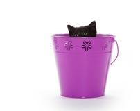 Black kitten in purple pail. Cute black baby kitten inside of purple bucket isolated on white background stock photography