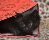 Black kitten in a red bag Royalty Free Stock Photography