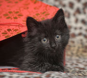 Black kitten in a red bag Royalty Free Stock Photo