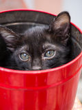 Black kitten in red bucket Royalty Free Stock Photo