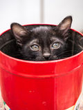 Black kitten in red bucket Royalty Free Stock Photography