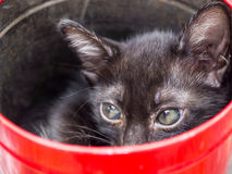 Black kitten in red bucket Stock Photography