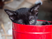 Black kitten in red bucket Royalty Free Stock Images