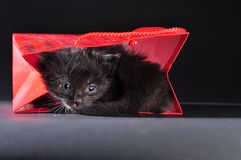 Black kitten in red gist bag Stock Images