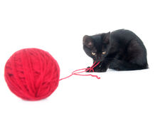 Black kitten and red yarn Stock Images