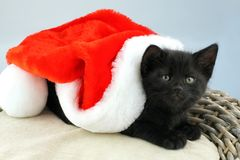 Black kitten with Santa Claus hat. royalty free stock image