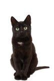 A black kitten sits. Black kitten with large green eyes. A kitten looks ahead Stock Image