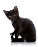 The black kitten sits with the raised paw with claws. Royalty Free Stock Photo