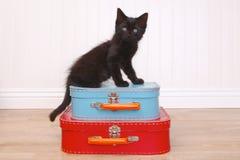 Black Kitten Sitting Atop Luggage on White Royalty Free Stock Photo