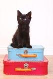 Black Kitten Sitting Atop Luggage on White Stock Images