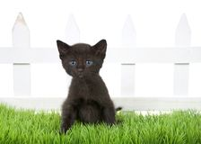 Black kitten sitting in green grass in front of white picket fence isolated. Adorable black tabby kitten sitting in green grass in front of a white picket fence royalty free stock photos