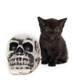 Black kitten with skull Royalty Free Stock Photo