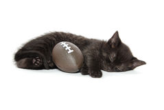 Black kitten sleeping Stock Image