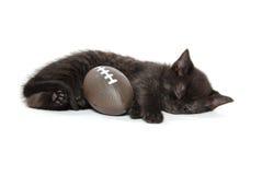 Black kitten sleeping Stock Image