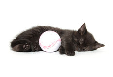 Black kitten sleeping Royalty Free Stock Photo