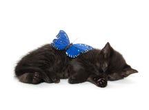 Black kitten sleeping Stock Photos