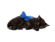 Black kitten sleeping Stock Photography