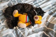 Black kitten sleeping on bed with orange crochet teddy bear. Closeup of black kitten sleeping on bed with orange crochet teddy bear stock photo