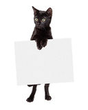 Black Kitten Standing Holding Blank Sign Stock Photo