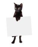Black Kitten Standing Holding Blank Sign Stock Photo