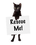 Black Kitten Standing Holding Rescue Sign Royalty Free Stock Images