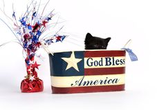 Black kitten in 4th of July container stock photography