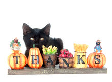 Black kitten and thank you sign. Black cat sitting with a fall thank you sign on white background Royalty Free Stock Images