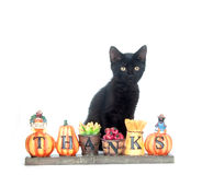 Black kitten and thank you sign. Black cat sitting with a fall thank you sign on white background Stock Photo