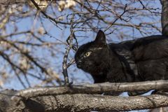 A black kitten on a tree learns to hunt. royalty free stock images