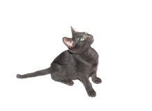 Black kitten waiting Royalty Free Stock Images